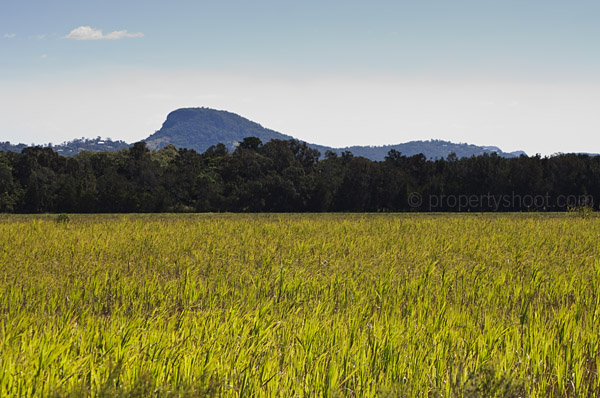 Mt Ninderry and cane farm