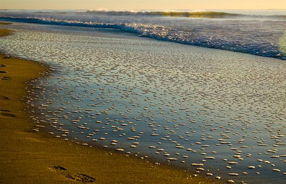 Golden light after sunrise on Yaroomba Beach, Sunshine Coast.
